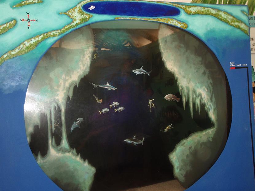 ブルーホールの内部